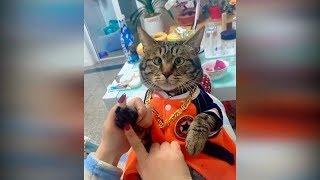 Смешные приколы с животными 2019 №33. Новые приколы с котами и кошками до слез. Лучшие приколы 2019