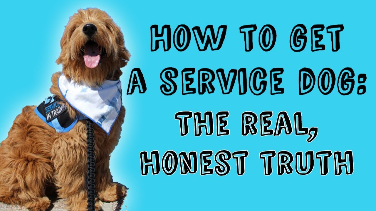 How to Get a Service Dog for Your Blind or Visually Impaired Child pics