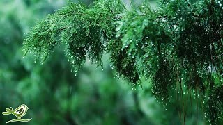 Relaxing Music & Soft Rain Sounds - Beautiful Pian...