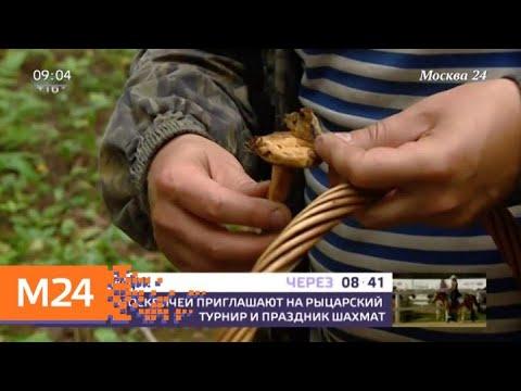 Семья отравилась грибами в Подмосковье - Москва 24