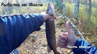 Рыбалка на ЯМАЛЕ Тайга малая река осень Рыбалка на спиннинг Часть 2