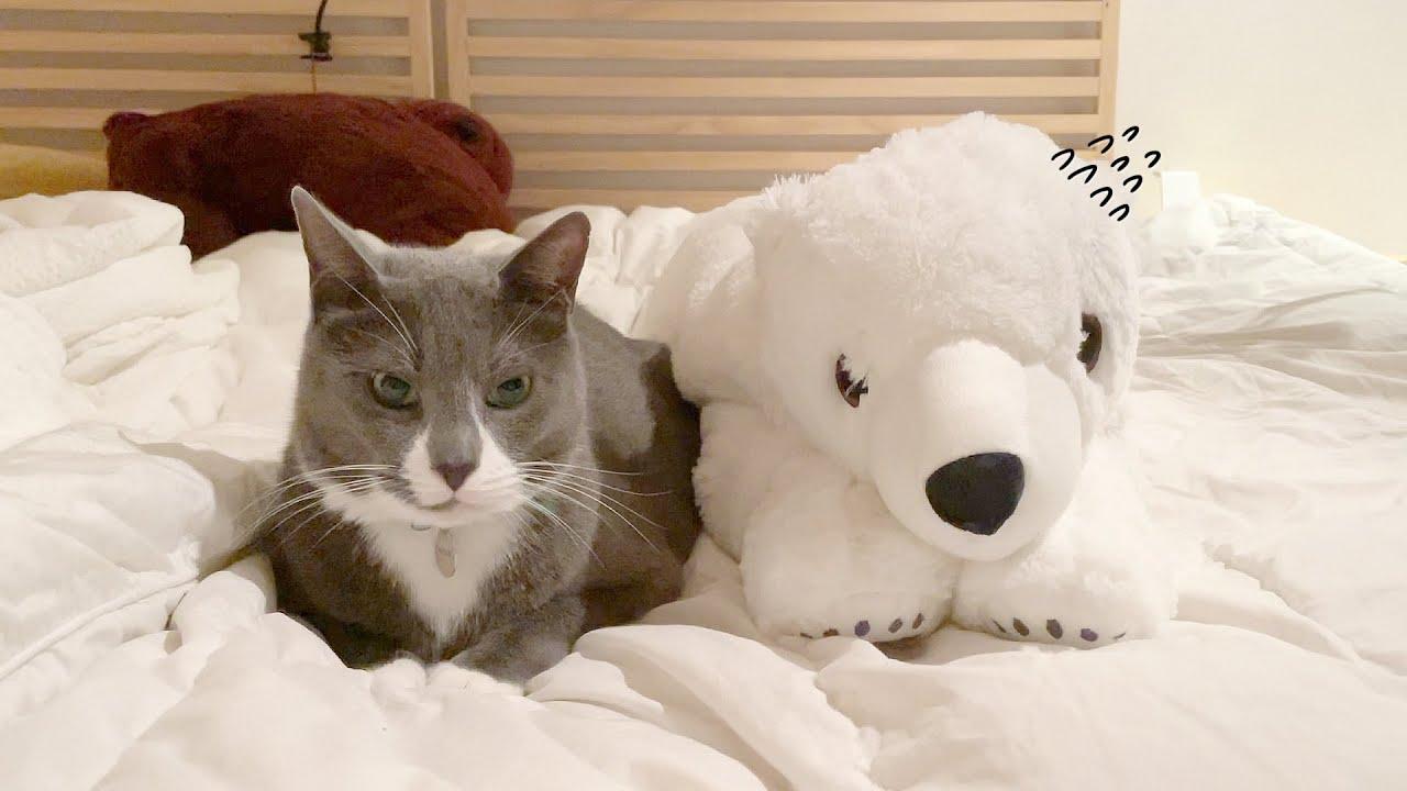 고양이 소굴로 잘못 입양 온 백곰......