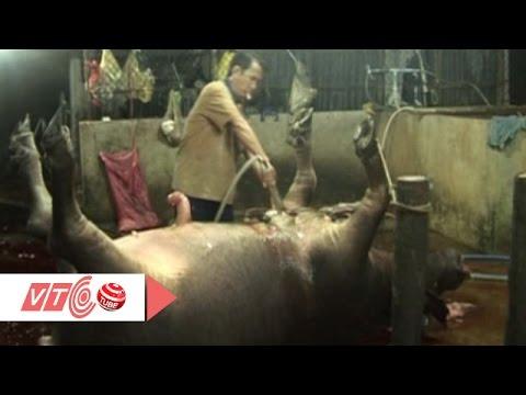 Kinh hoàng: Bơm nước vào bò trước khi mổ | VTC
