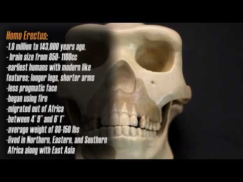 Homo Habilis Documentary : Part 1