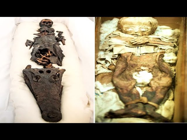Mummy Of Half Princess Half Crocodile Revealed After Being Kept Hidden During More Than A Century
