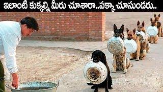 ఏంటి మీరు ఇలాంటి కుక్కల్ని చూసారా ??పక్కా చూసుండరు ... Best  Trained And Disciplined Dogs In Telugu