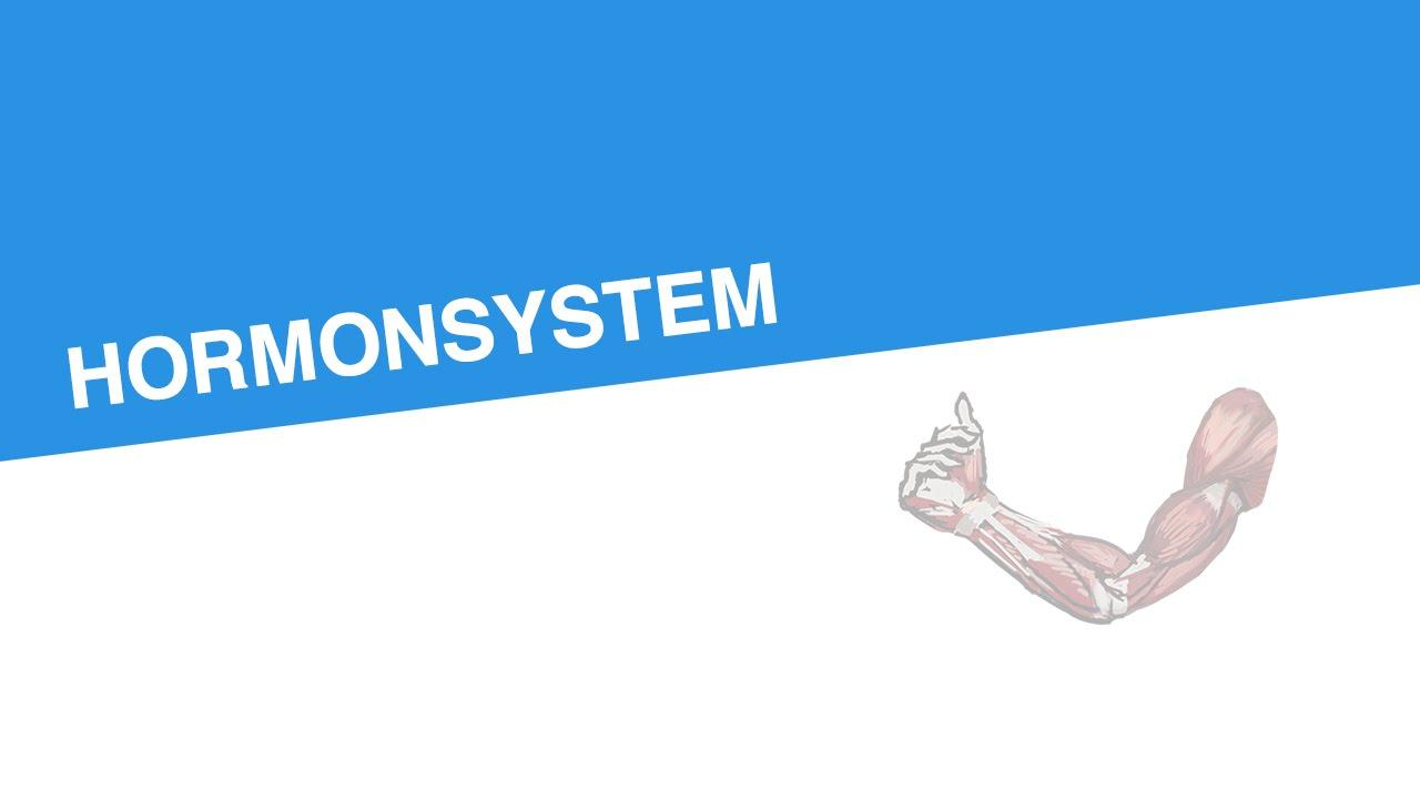 HORMONSYSTEM | Biologie | Biologie des Menschen (Mittelstufe) - YouTube