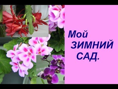 Экскурсия по дому. Мой зимний сад. | Indoor Plants.
