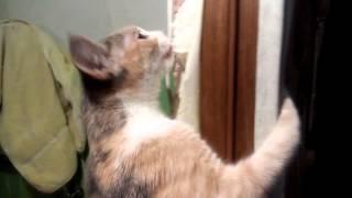 Кошка удалитель пены
