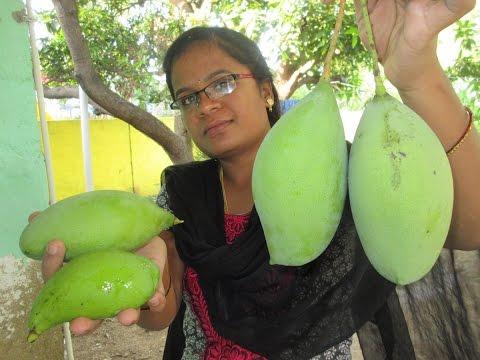 FARM FRESH MANGO RECIPE | Sweet Mango Fry Cooking in My Village | VILLAGE FOOD