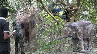 Heroes to save the elephant shot in wild