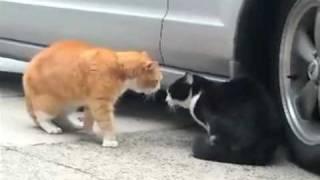 Talking Cat Turf War