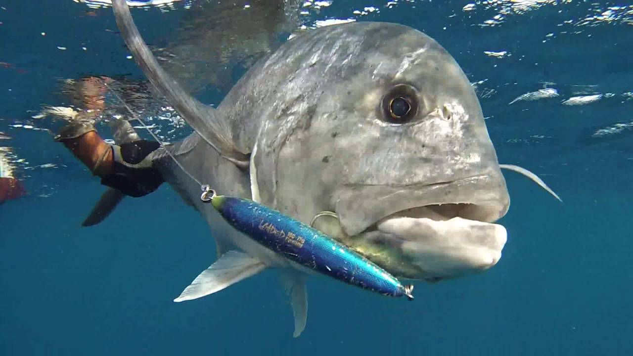 Fishing on the reef red sea sud n youtube for Red sea fish