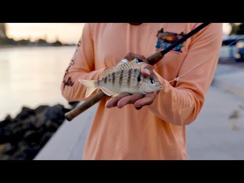 DIY SABIKI RIG - LIVE BAIT HACK (How To Catch Pinfish)