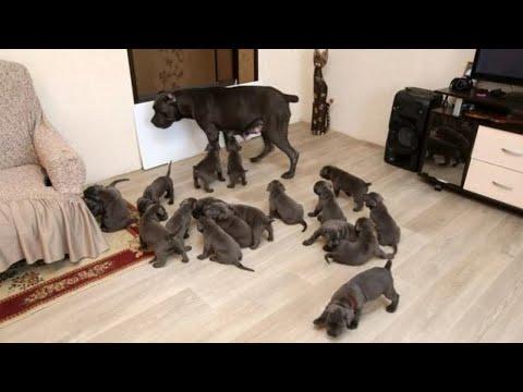 Pies rodził, a właściciel nie mógł uwierzyć własnym oczom!