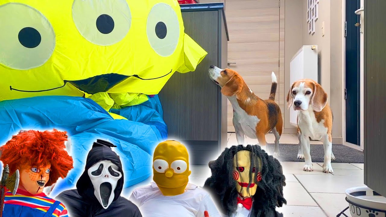 Dogs vs Scary Costumes PRANK !