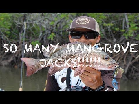 INSANE MANGROVE JACK FISHING- SMALL CREEK, BIG JACKS- SOFT PLASTIC LURES- JACK AFTER JACK AFTER JACK