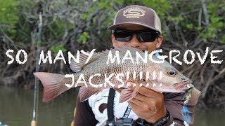INSANE MANGROVE JACK FISHING- SMALL CREEK, BIG JACKS- SOFT PLASTIC LURES- JACK AFTER JACK AFTER JACK