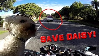 Biker saves Puppy... from certain uncertainty
