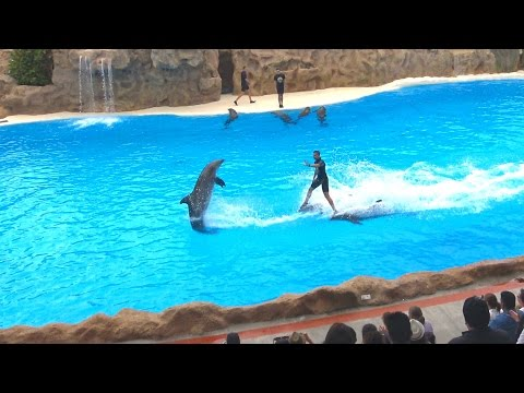 Loro Parque Dolphin Show  -The best  5 minutes | 4K