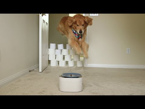 oshie-vs-the-great-wall-of-toilet-paper-|-oshies-world