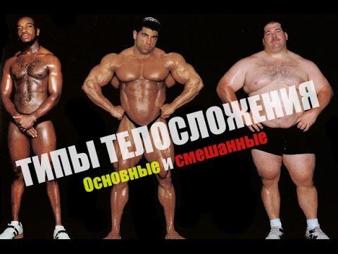 Типы телосложения и их характеристика