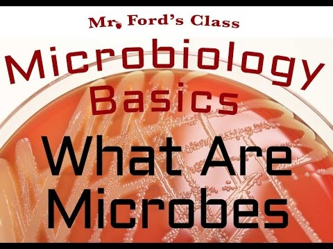 What Are Microbes : Microbiology Lectures