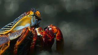 Crab vs Eel vs Octopus | Blue Planet II | BBC Earth