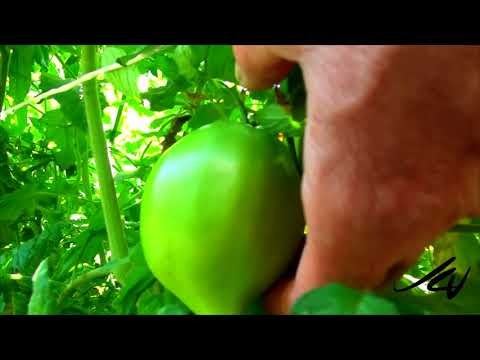 Cindy's Garden Tour - July 9, 2019 -  Okanagan, British Columbia , Canada  - YouTube