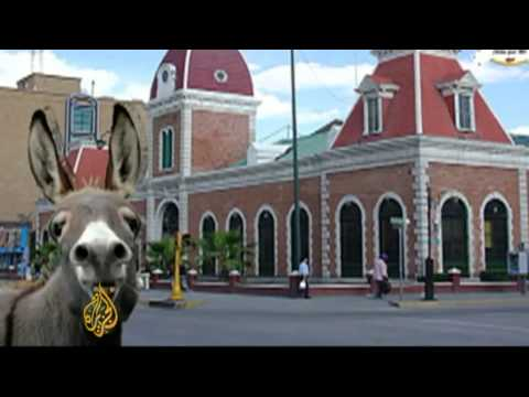Four-legged candidates compete for Mexico
