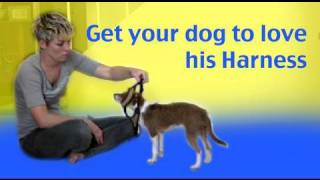 How To Train Your Dog To Love His Harness- Dog Training