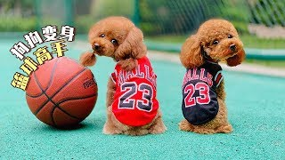 A little kid teachs two dogs to play basketball, they can hit a hundred shots!