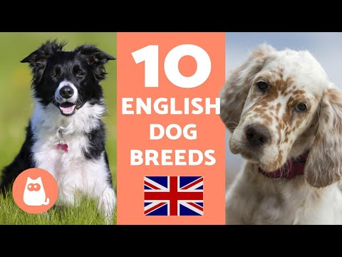 10 English Dog Breeds - With Descriptions