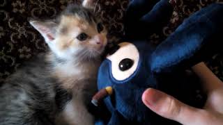 Deadly Kitten versus Scary Poisonous TF2 Spycrab Battle >Team Fortress 2<