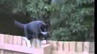 Funny Cat Walking On Fence (terry)