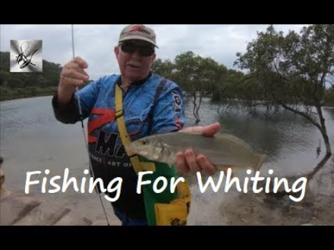 Fishing For Whiting | Fishing & Cooking