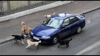 Юмор и прикол. Собаки загрызли машину 2018  Humor and funny The dogs bit the car