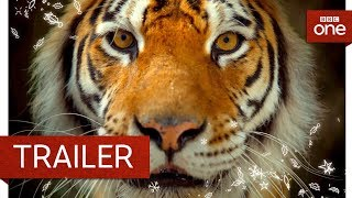Big Cats: Trailer - BBC One