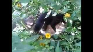 Кошачий группен секс