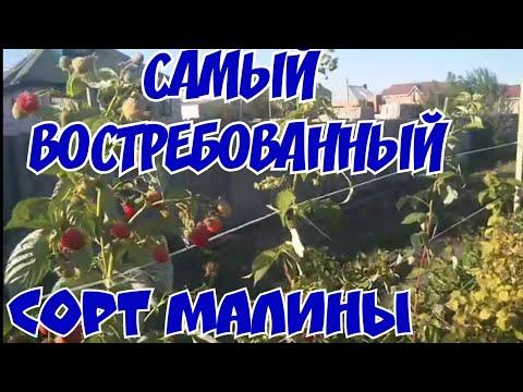 «ЛУЧШИЕ МИРОВЫЕ СОРТА малины:МАЛИНА (МАРАВИЛЛА)!»