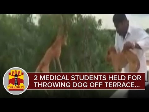 2 Medical Students held for Throwing Dog Off Terrace under 3 Sections  - Thanthi TV