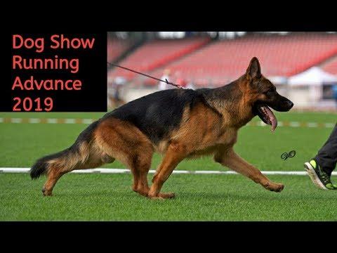 Dog show training German shepherd advance Move   dog training  / dog show video / racing show German
