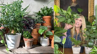 Pick The Perfect Pot For Your Plant A Beginner S Guide Youtube