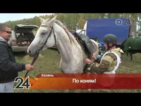 День коня отметили в Арском районе Татарстана