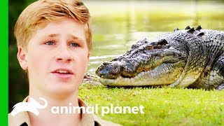 Download Moving The Biggest Croc At Australia Zoo | Crikey! It's The Irwins Mp3 and Videos