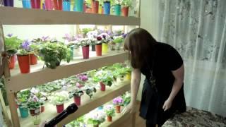 Салдинка выращивает более 400 сортов фиалок