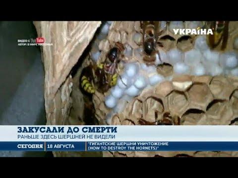 Рой шершней закусал до смерти жителя Харьковской области