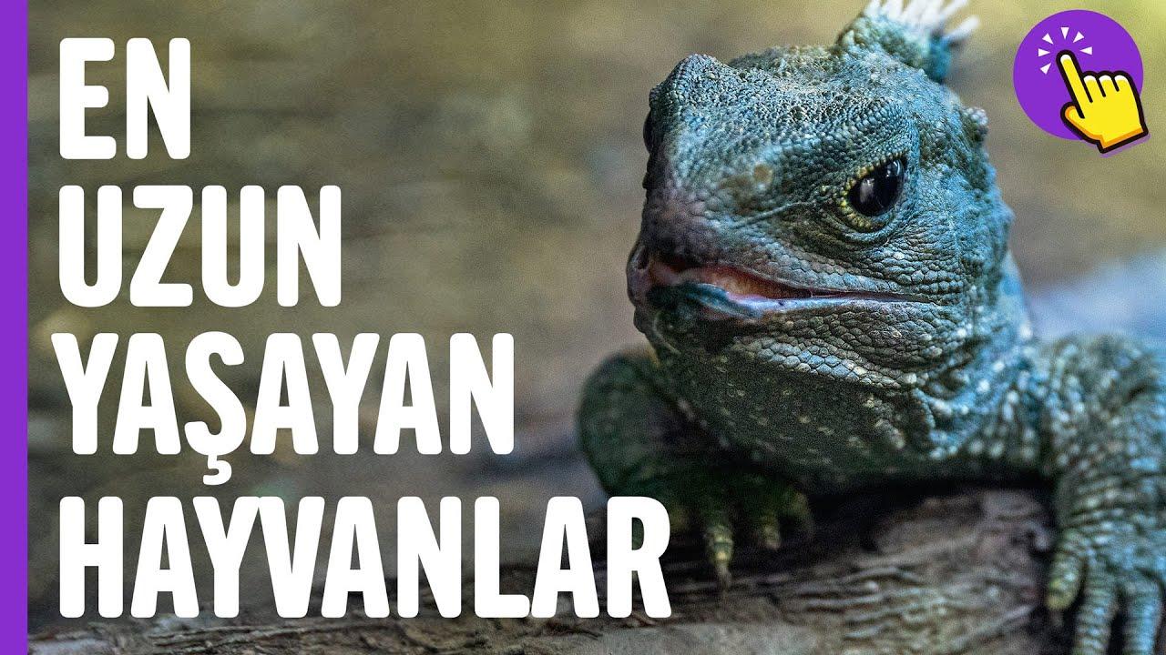 En uzun yaşayan hayvanlar | Hayvanlar alemi | İlginç bilgiler | Aklında olsun