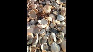 видео Станица Голубицкая: отели у моря