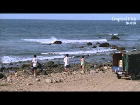 《熱帶魚》Tropical Fish |數位修復預告 Trailer|中影,中影數位電影頻道,經典影片,數位修復